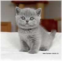 Foto 2 BKH Katzenbabys