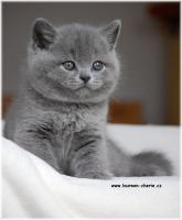 Foto 3 BKH Katzenbabys