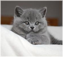 Foto 4 BKH Katzenbabys