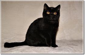 Foto 9 BKH Kitten