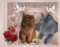 Foto 4 BKH Kitten in Farbe Schoko und Schwarz