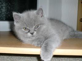 Amira (Katze)
