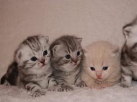BKH Kittys