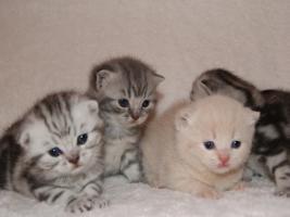 Foto 2 BKH Kittys