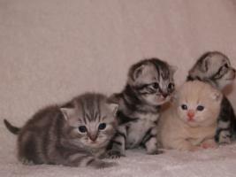 Foto 3 BKH Kittys