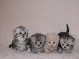 Foto 4 BKH Kittys