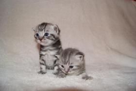Foto 5 BKH Kittys