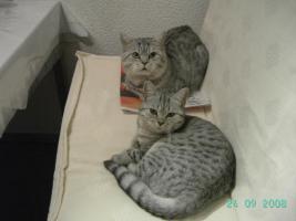 Foto 2 <BKH-Wyskas Katze sucht Schmuseplatz