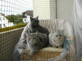 Foto 3 <BKH-Wyskas Katze sucht Schmuseplatz