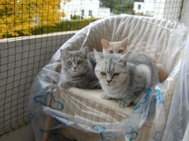 Foto 4 <BKH-Wyskas Katze sucht Schmuseplatz