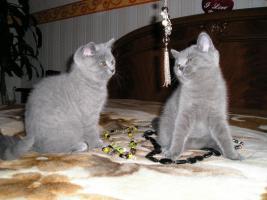 Foto 2 BKH babys