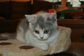 Foto 2 BKH - Kätzchen sucht noch ein neues Zuhause