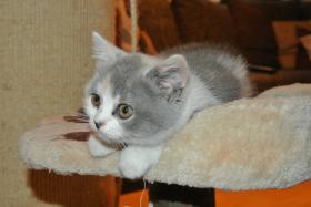 Foto 3 BKH - Kätzchen sucht noch ein neues Zuhause