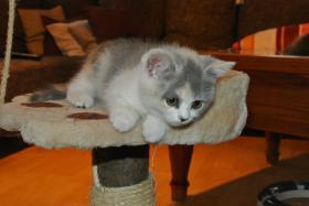 Foto 4 BKH - Kätzchen sucht noch ein neues Zuhause