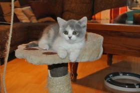 Foto 5 BKH - Kätzchen sucht noch ein neues Zuhause