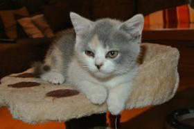 Foto 6 BKH - Kätzchen sucht noch ein neues Zuhause