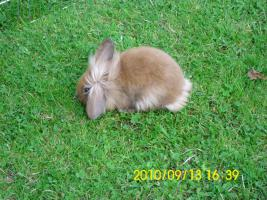 Baby Kaninchen 2 monate