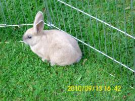 Foto 2 Baby Kaninchen 2 monate