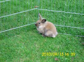 Foto 3 Baby Kaninchen 2 monate