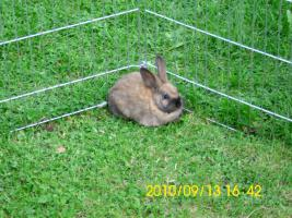 Foto 4 Baby Kaninchen 2 monate