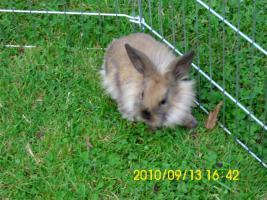 Foto 5 Baby Kaninchen 2 monate