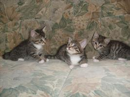 Foto 2 Baby Katzen