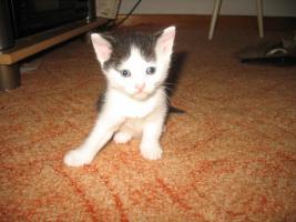 Foto 3 Babykatzen