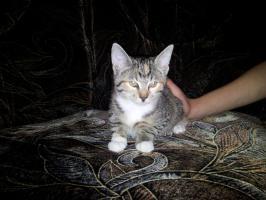Foto 2 Babykatzen