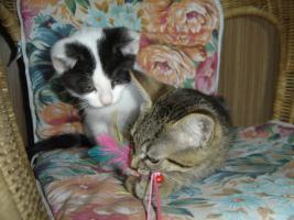 Foto 2 Babys, Katzenkinder u. erwachsene Kätzchen