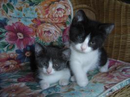 Foto 3 Babys, Katzenkinder u. erwachsene Kätzchen