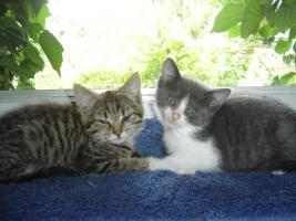 Foto 6 Babys, Katzenkinder u. erwachsene Kätzchen