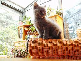 Foto 5 Baerchen suchen neues Zuhause