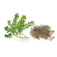 Bärentraub Blätter 500 gr. Arctostaphylos uva-ursi