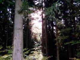 Bäume fällen kostenlos