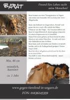 Barat ''Freund fürs Leben''-  mein Pflegehund aus Ungarn