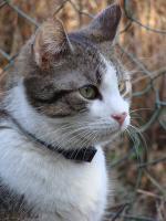 Foto 4 Barney - ein Tigerkater zum Kuscheln