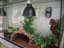 Foto 4 Bartagame mit Terrarium