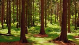 Barzahler sucht 120 ha Wald in Kärnten