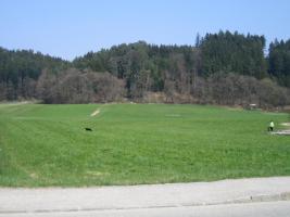 Baugrundstück in Pischelsdorf am Engelbach
