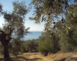 Baugrundstück auf dem schönen Pilion/Griechenland