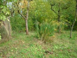 Foto 2 Bauland / Baugrundst�ck � auch f�r Anleger und Camping- und Naturfreunde geeignet