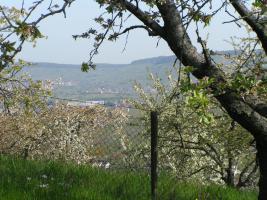 Foto 2 Baumgrundstück mit Aussicht