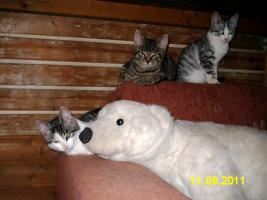 Bauwagen ab 5 Meter für Katzenschutz Projekt gesucht