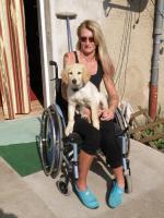 Foto 2 Behindertenbegleithund