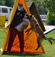 Foto 2 Belgischer Schäferhund Malinois
