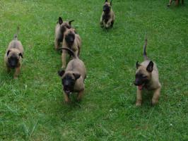 kleinanzeigen berlin hunde bayreuth