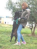 Foto 2 Belgischer Schäferhund Mischling VAN GOGH sucht ein Zuhause oder eine PS