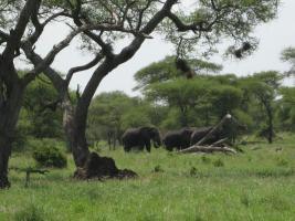 Foto 4 Bergtouren / Safaris in Tansania