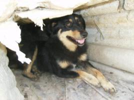 Betty (geb. 2008)
