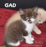 Foto 6 Bezaubernde Britisch Kurzhaar Kätzchen abzugeben
